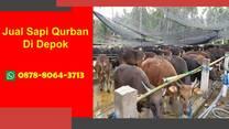 WA 0878-8064-3713, Pedagang Sapi Qurban 2021 Di Dekat Depok
