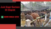 WA 0878-8064-3713, Pedagang Sapi Qurban 2021 Di Area Depok