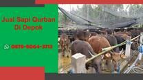 WA 0878-8064-3713, Pedagang Sapi Qurban 2021 Di Kawasan  Depok