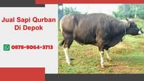 WA 0878-8064-3713, Pedagang Sapi Qurban 2021 Depok