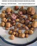 ox-cow gallstones in great quantity for sale.