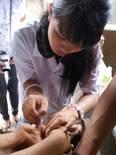 Students practicals castration