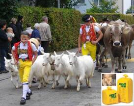 Test series 2013: performed by the division of Ambulatory Service and Herd Health