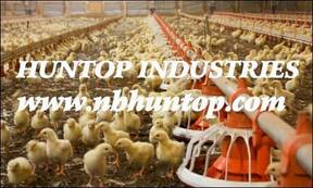 Poultry farming, Poultry equipment, Poultry farm equipment