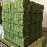 Grade A Lucerne Bales for sale whatsapp +27631521991