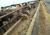 Cattle Feeds for sale whatsapp +27631521991