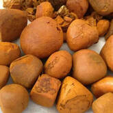 South African Ox Gallstone supplier