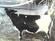 jersy cow