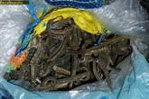Sun Dried Seahorse /Hippocampus