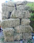 Bulk Alfalfal  Hay for Animal Feeds