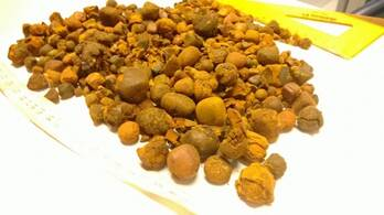 quality Ox Cow Gallstone For Sale and Dry Seahorse For Sale