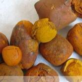 Best premium grade cow gallstones for sale .