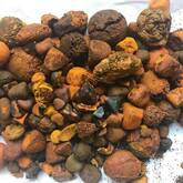 Natural Ox Gallstones for sale for sale