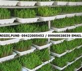 Hydroponics Fodder Growing System