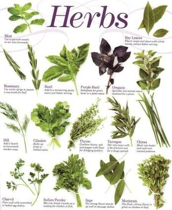 Raw dried materials of essential oils such as Oregano, Thyme, peppery mint, Cumin, Anise, Fennel see