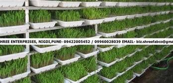 GREEN FODDER PRODUCTION SYSTEM
