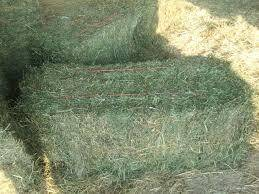 Quality Alfafa Hay for Animal Feeding Stuff Alfalfa / Alfalfa Hay / Alfalfa Hay F