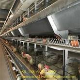 types of poultry houses_shandong tobetter style complete