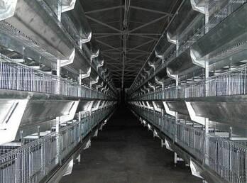 poultry equipment supplies_shandong tobetter reputation