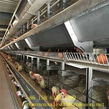 poultry house construction_shandong tobetter reasonable structure