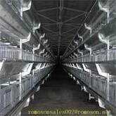 chicken house_shandong tobetter advanced technology