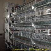 poultry equipment manufacturers_shandong tobetter  known for