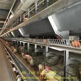 chicken poultry equipment_shandong tobetter full range