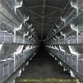hen house_shandong tobetter advanced technology