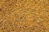 Roasted guar korma (56% protein min.)