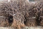 How Obama Government Develop Biomass Energy? (IV)