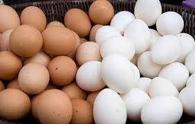Quality Fresh White And Brown Table Eggs For Sell