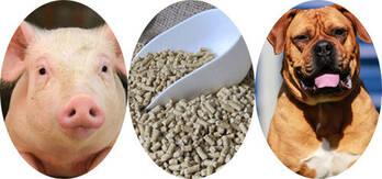 Creatine Monohydrate (CMH)Feed Grade