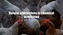 Essential oils against red mites