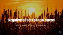 Negative effects heat stress layers and breeders