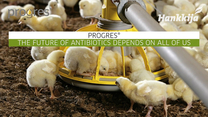 A natural solution for antibiotic free animal production - Progres®