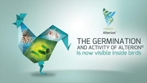 The germination of a Bacillus-based probiotic is key to product performance