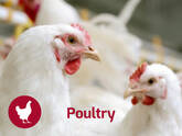 Poultry Nutrition Solutions