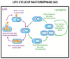Bacterial Diseases