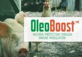 OleoBoost™