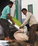 Dairy member collecting hydroponics fodder
