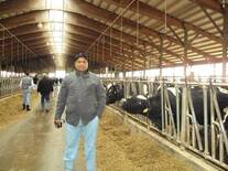Dairying in US