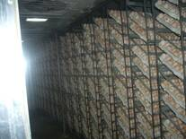 Setter view of a commercial hatchery