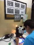 Embryo Stage Observation
