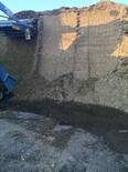 corn silage silo with high management but high seepage flood