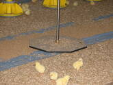 DWS-20 automatic live bird weiging system