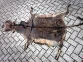 Wet and Dry Salted Donkey hides For Sale.