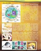 biocel
