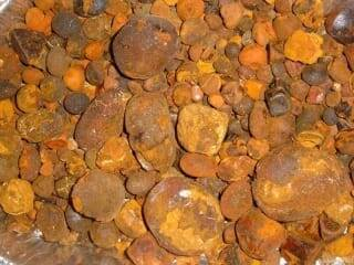 hot sale cattle ox cow gallstones