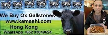 ox gallstones, cow gallstones, we buy whatsapp +852 9364 9624